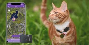 Cat GPS Collar