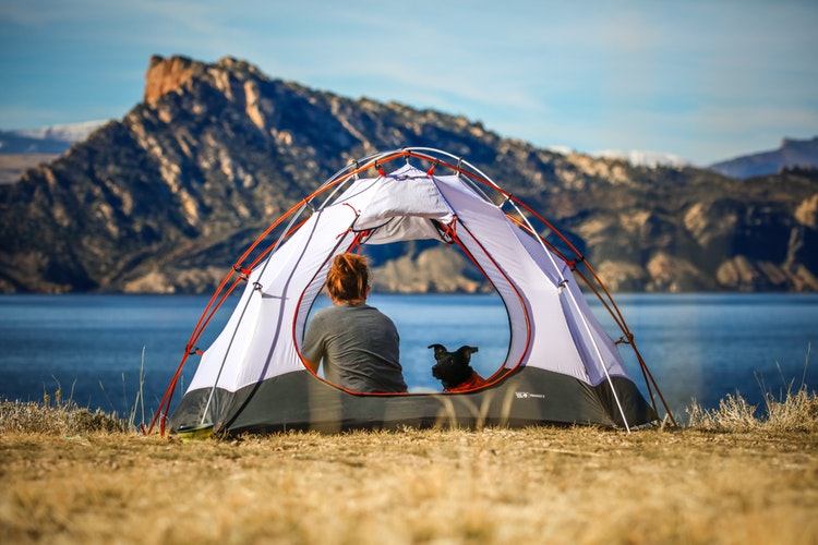 Dog Camping Tips Veterans