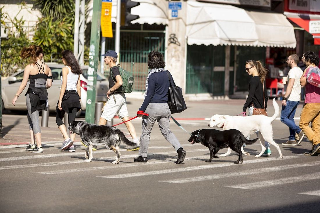 Dog Crossing Road in Tel-Aviv